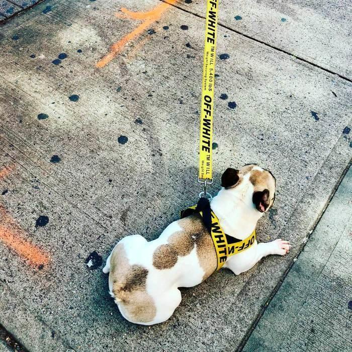 Off-White Dog Harness and Leash Set