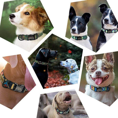 Personalized Dog Collar - Five Funky Pattern Adjustable