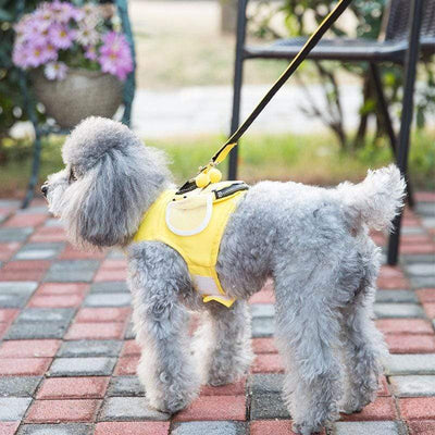 Premium Bee Vest Harness & Leash Set