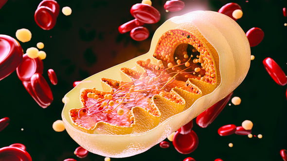 What is mitochondrial dysfunction and how does it affect aging