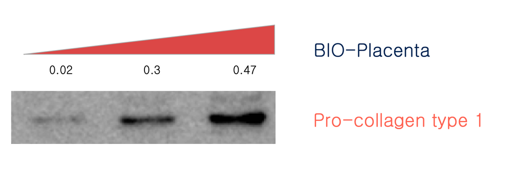 lab results showing bioplacenta and collagen growth