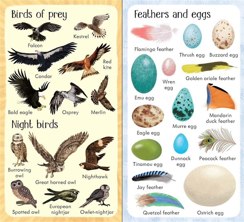 199 Birds Book - Meli & Ro | Kids Activity Packs
