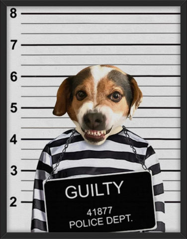 Guilty Pet
