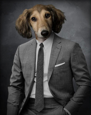 Pet Portrait - Suit Up #2