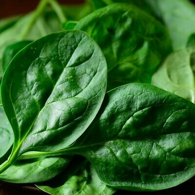 Baby Spinach (100g Bag)