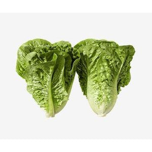 Lettuce Cos Twin Pack