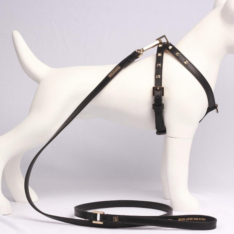 Luxus Hundeleine Kalbsleder Schwarz mit Gold - Not Too Pet