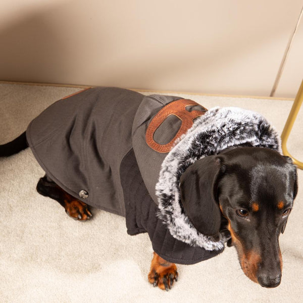 Graue Hundejacke Dackel - Milk & Pepper