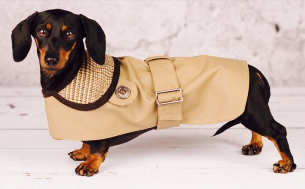Grosvenor English Dachshund Jacke Beige - Inamorada