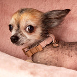 Hundehalsband Flieder mit goldener Schleife - Not Too Pet