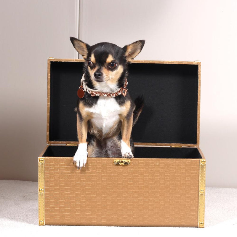 Chihuahua Designer Halsband Leder  - Not Too Pet