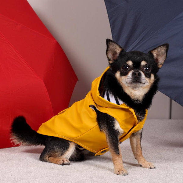 Chihuahua Regenjacke in Gelb - Milk & Pepper
