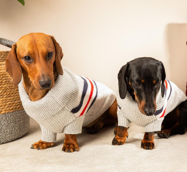 Tommy Hilfiger Style Pullover Dackel - Milk & Pepper