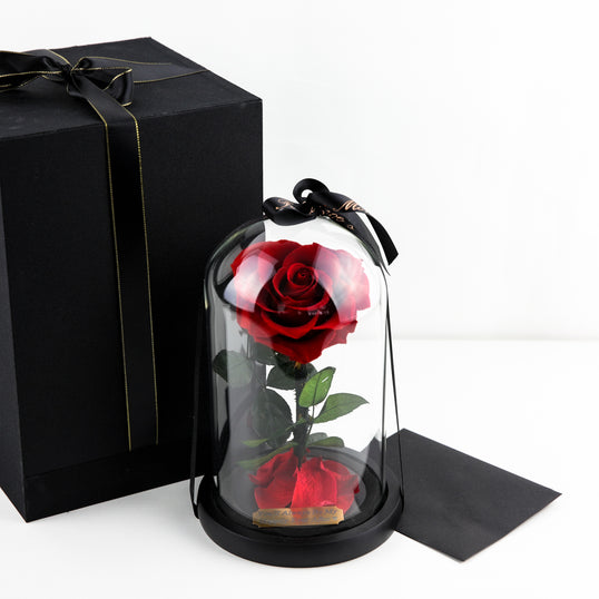 Enchanted Rose Collection