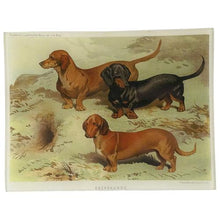 Load image into Gallery viewer, John Derian Dachshund Rectangular Tray