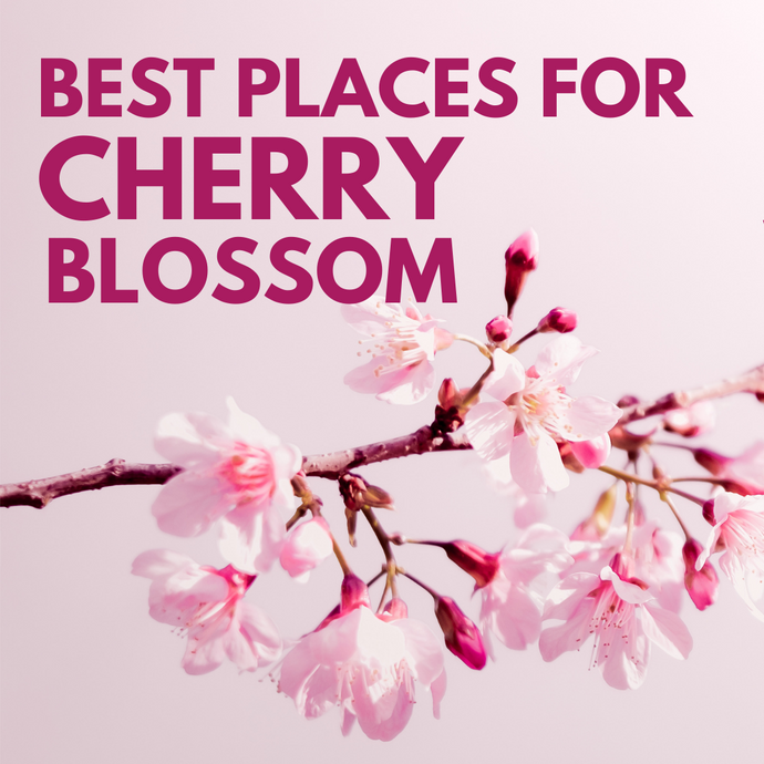 Best Places to Enjoy Cherry Blossom 2021