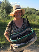 Marian Waite picking olives at River Flats Estate