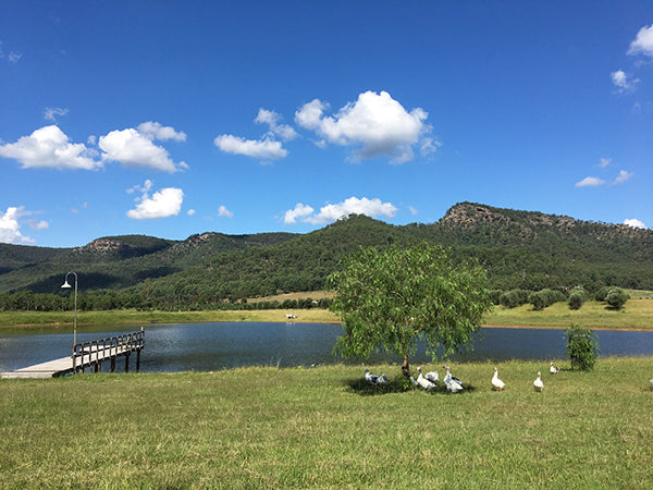 Geese under a tree, next to the River Flats Estate dam with a jetty, surrounded by a mountain range and a big blue sky