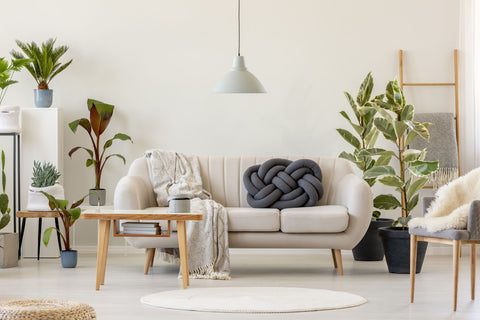 7 Indoor Plants to Keep Your Apartment Feeling Fresh