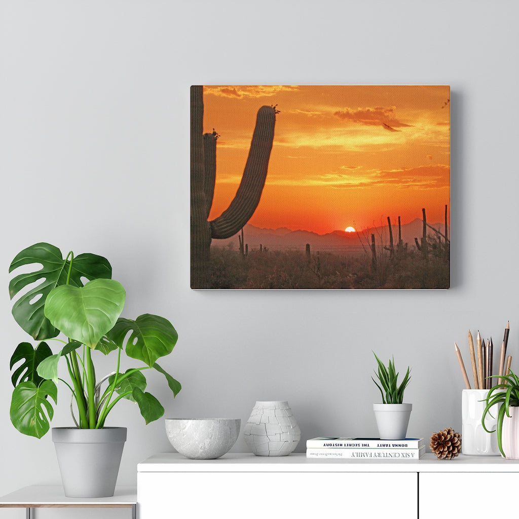 Wall Art | Canvas Wall Decor | Home Decor Midwest Decor Cactus Decor