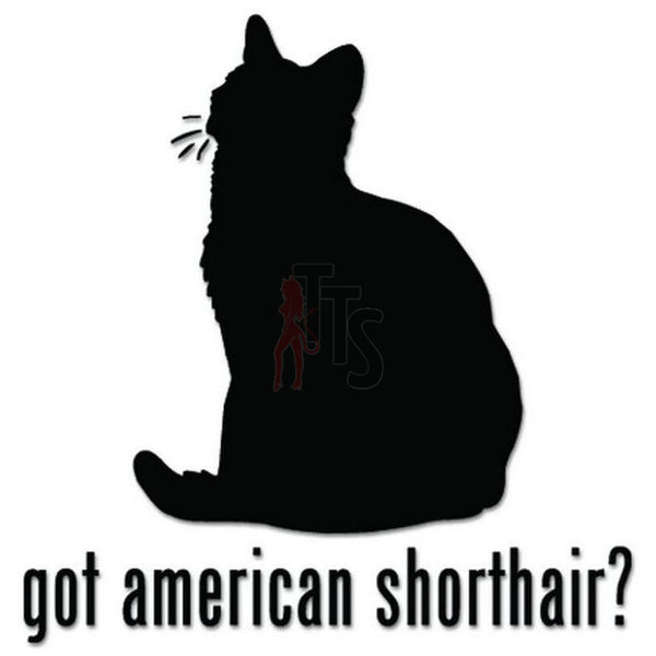 Got American Shorthair Cat Pet Decal Sticker