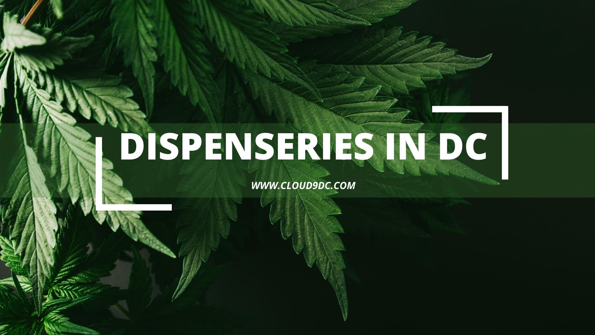 Dispensaries in DC banner