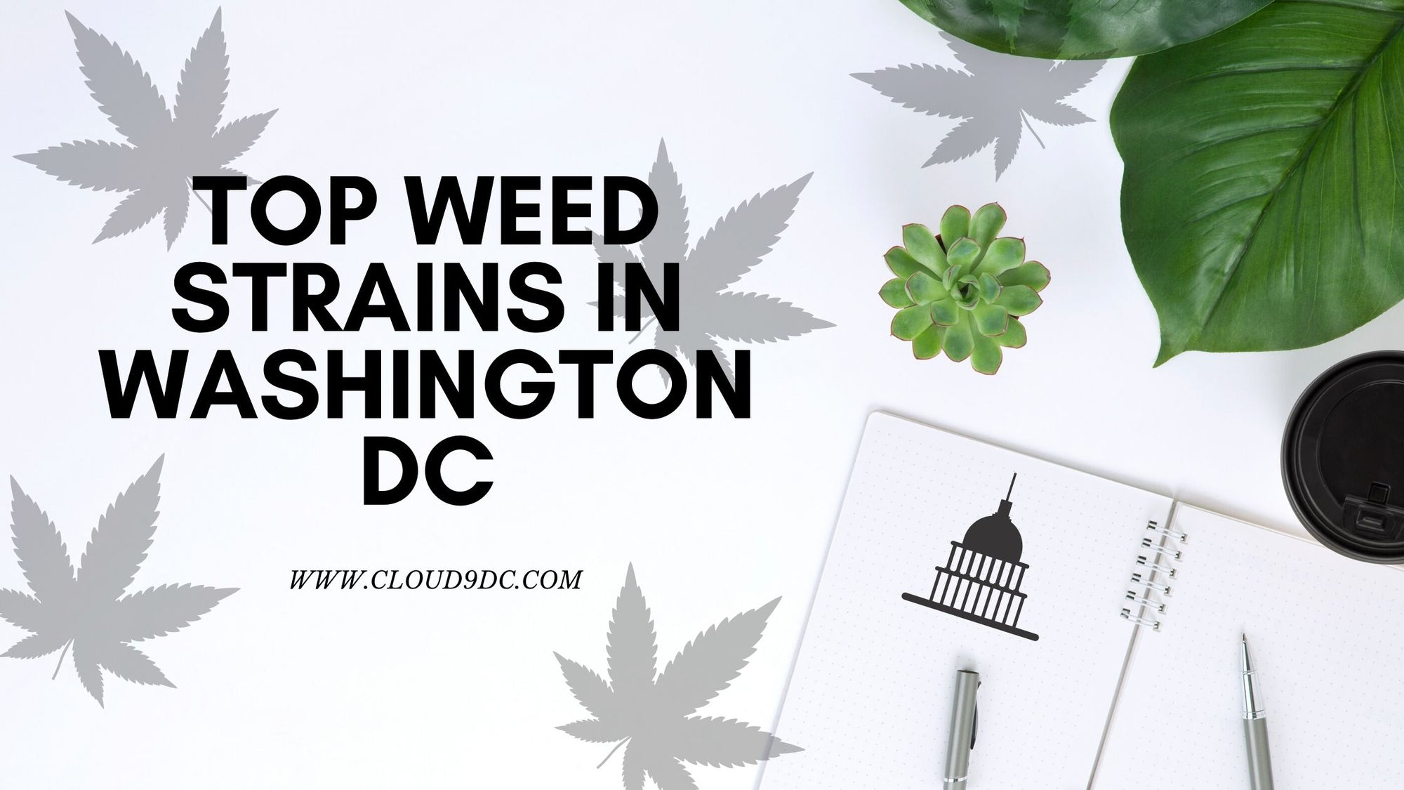 Washington DC Weed Banner