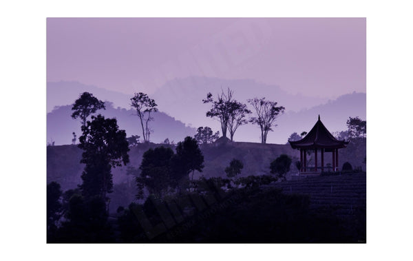 Tea plantation at sunset - Abstract Wall Art