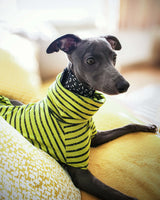 THE BUBBA Striped Whippet T-Shirt/Jumper