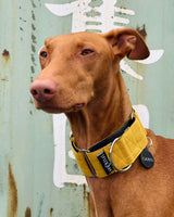 THE ROXY Martingale Dog Collar & Lead Collection
