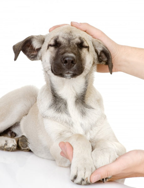 What is Animal Reiki?