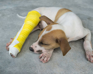Dog recovering from broken leg