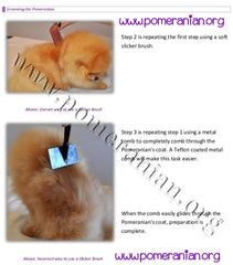 The Pomeranian Grooming & Trimming Guide - PomWorld.Com