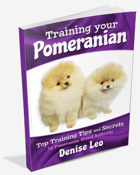 Training your Pomeranian. Top Pomeranian Training Tips (eBook) Instant download. - PomWorld.Com
