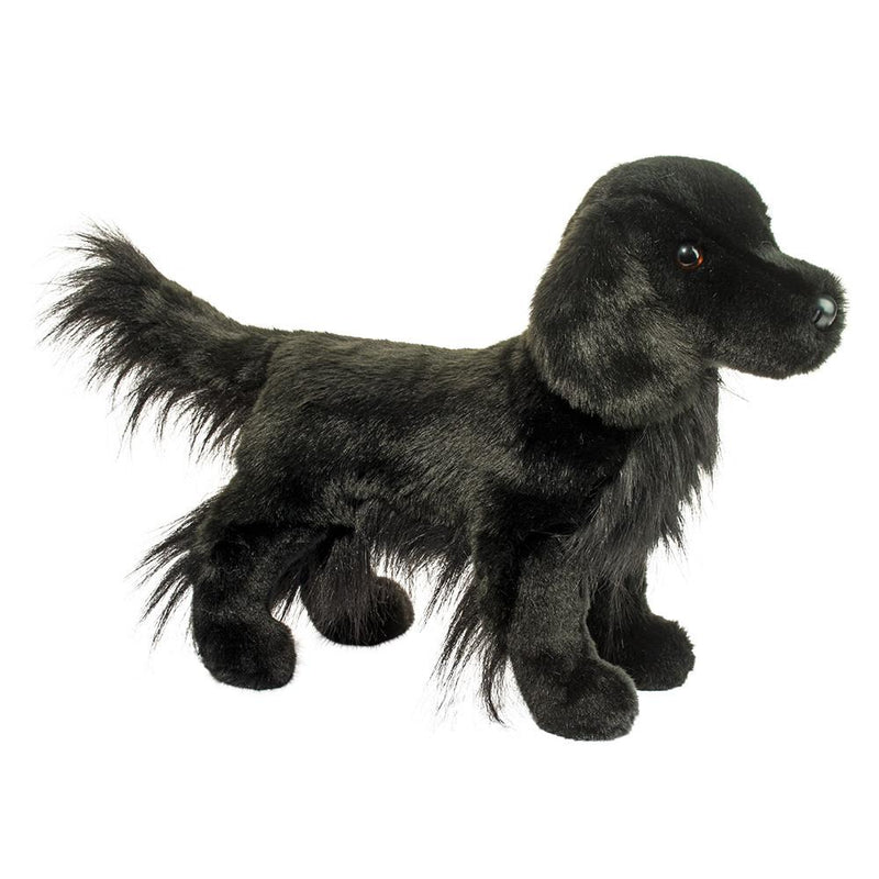 Douglas - Jett Flat-Coated Retriever