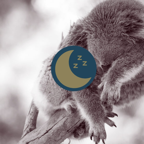 Goodnight Sugarloaf Bush Babies: A Childrens Sleep Story