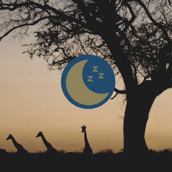 Under The Botswana Sky Sleep Story