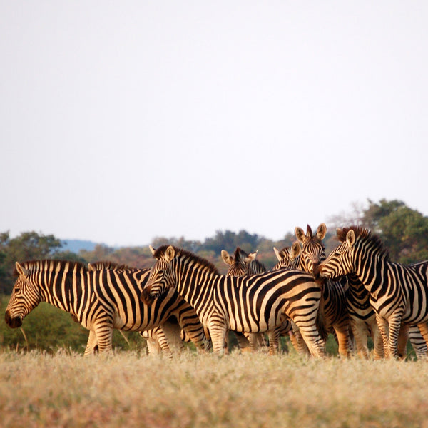 Africa Unleashed: 8 Tips For Safari First-Timers