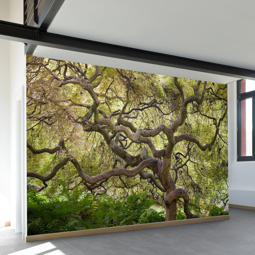 Wallpaper Decal: Japanese Maple