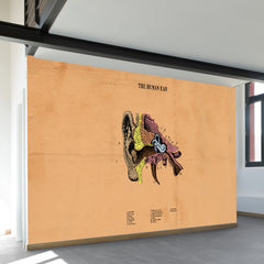The Human Ear Wall Mural
