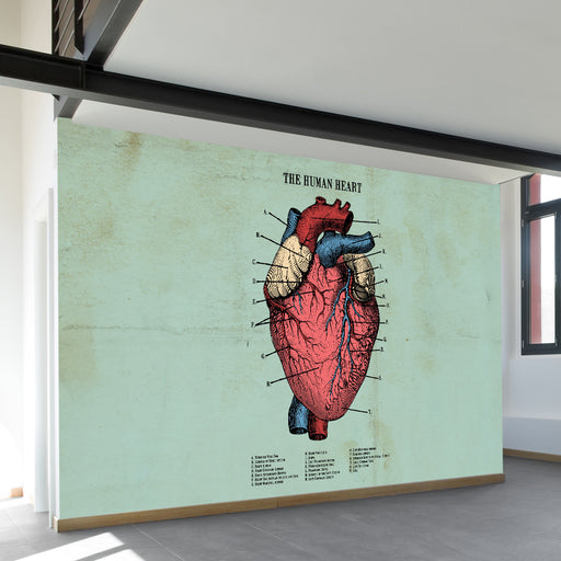 The Human Heart Wall Mural by Walls Need Loveᄄ