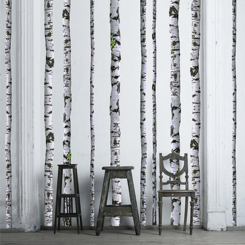 Elegant Birch Tree Decals On White Painted Wall. Part 17
