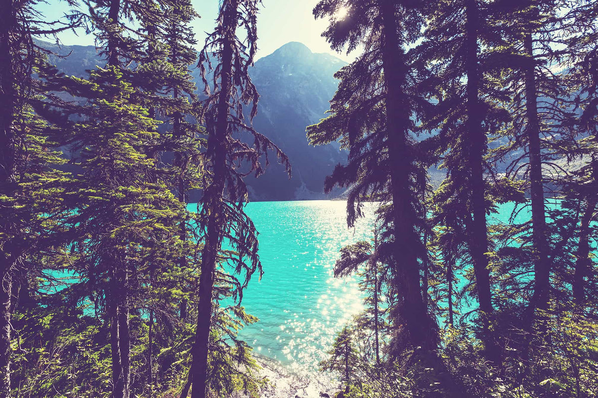 Lake Joffre Through the Trees image