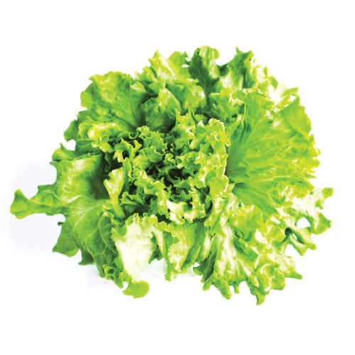 Leaf Lettuce - 1 head