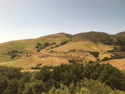 green rolling california hills
