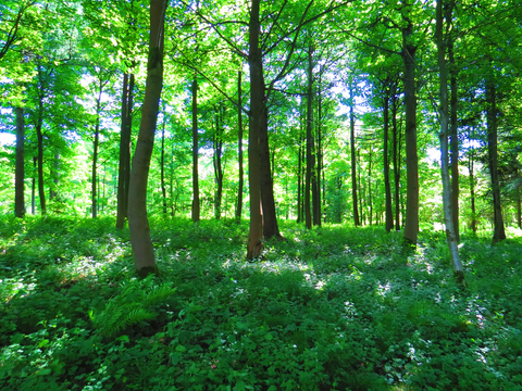 Sunny forest with ferns