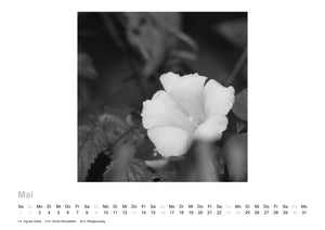 Photo Calendar By Edward D. McKeithen 2021