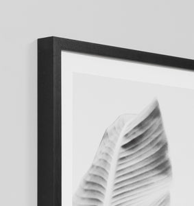Splendour Framed Art - Banana Tree 1