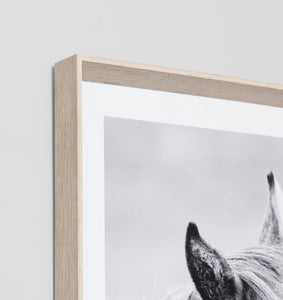 Splendour Framed Art - Equine Kiss