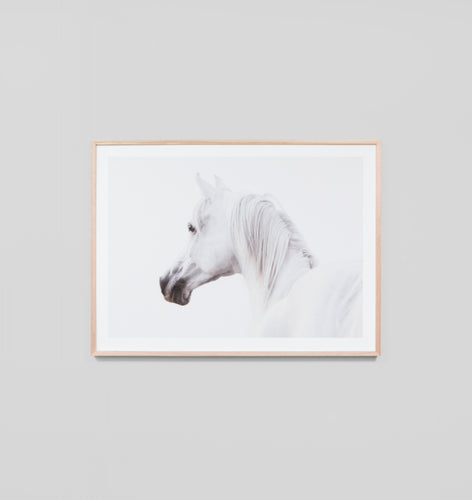 Splendour Framed Art - Arabian Steed